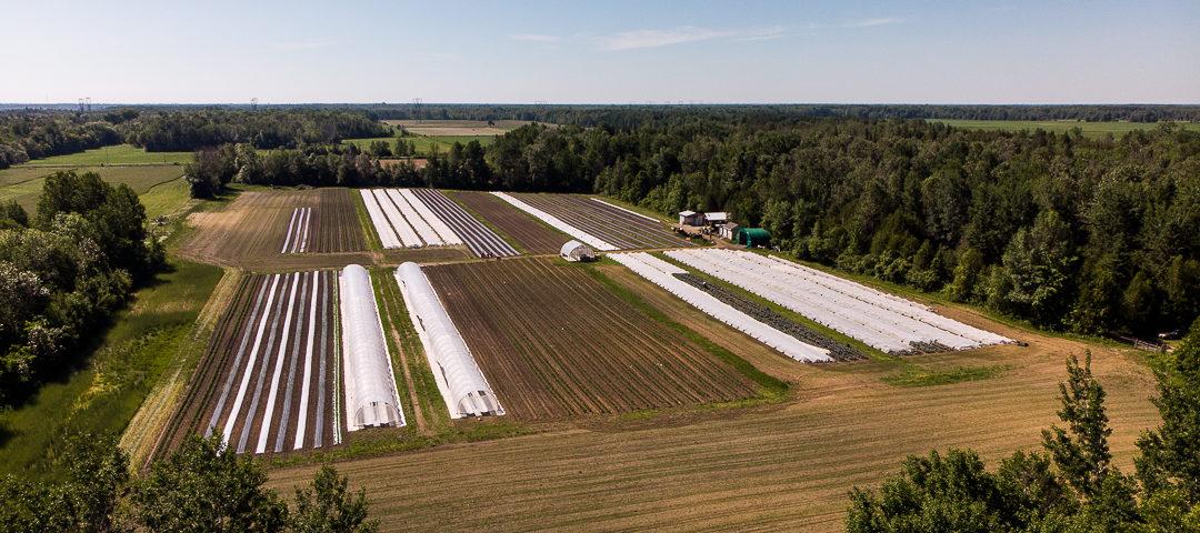 community harvest farm poverty ottawa community